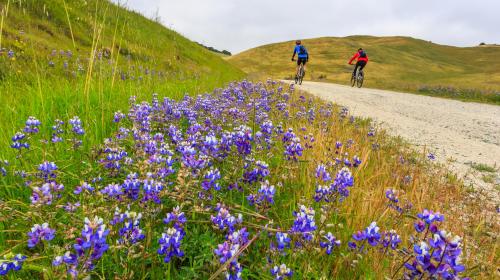 decorative image of Monterey County, CA